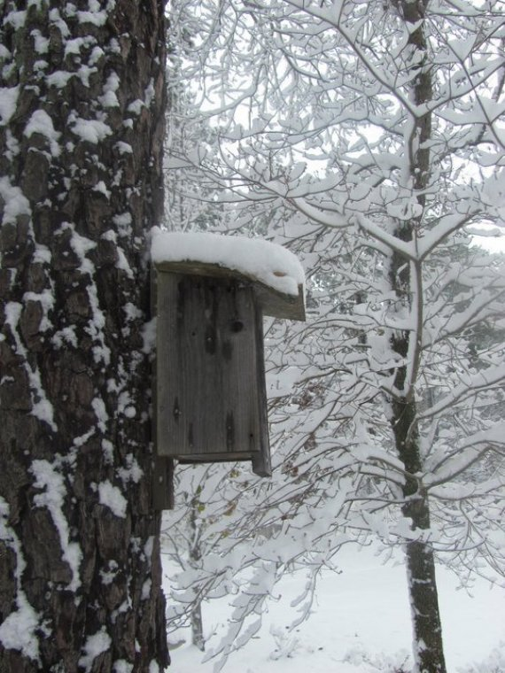 One Of Our Blue Bird Houses After A Bit Of Snow Blue