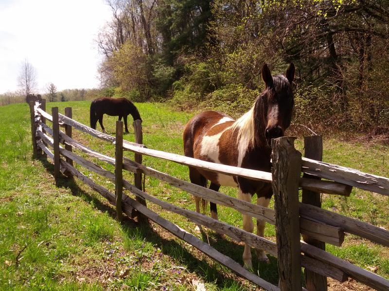our-cabin-brp-horse-Copy.jpg