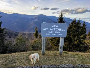 mt mitchell vacation properties